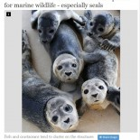 Offshore Wind Farms Create 'Reef Effect' Perfect for Marine Wildlife - Especially Seals